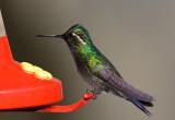 colibri030208.jpg