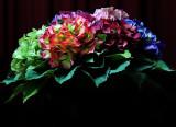 Hydrangea (23 Jun 10)