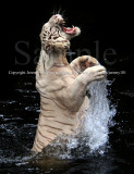 You Can Feel The Power...!, White Tiger  (Jul 10)
