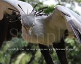 Secretary Bird (Jul 10)