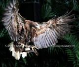 Landing Of The Sea Eagle - 3 (Jul 10)