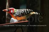 A Colorful Bird (Aug 10)