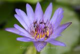 Flower (Sep 05)