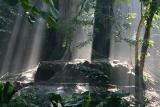 Morning Light Breaking Through The Rainforest Trees On The Hyenas' Den (Apr 06)