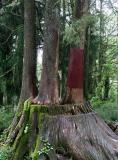 4 Brothers' Trees, Alishan Forest Recreation Area (May-Jun 06)