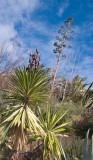 Palms and agave