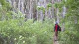 Hidden forest, 1Bohuslan walk.jpg