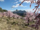 Blossom and the Bernia Ridge