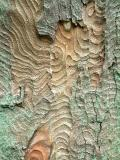 Bark patterns