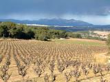 Montserra,t vines and rain shower