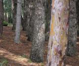 Woods, La Pedriza
