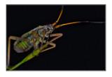 Various bugs