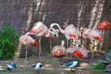 flamingoes and friends