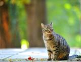 Hello kitty: I love my Bokeh....meow!  :-)