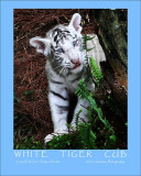 Water Colored White Tiger Cub 2.jpg