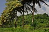 Martinique-004.jpg