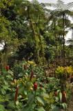 Martinique-016.jpg