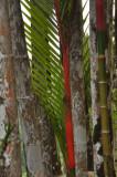 Martinique-025.jpg