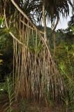 Martinique-028.jpg