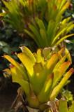 Martinique-066.jpg