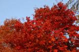Rouge-142.jpg