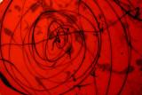 Rouge-248.jpg