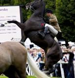 bucking horse .jpg