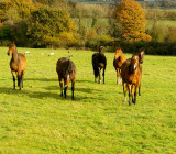 horses 1.jpg