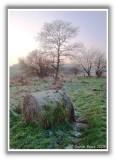 Forgotten Hay Bale