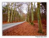 Road to Kinshaldy