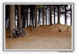Tentsmuir Bicycle