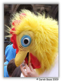 Friendly Chicken