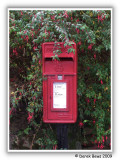 Fuchsia Mail Box