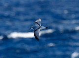 sydney_pelagic_12_june_prions