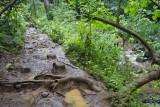 c4181 Path along Maunawili Stream