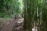 c4778 Bamboo Forest