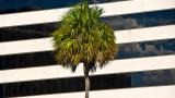Downtown Palm