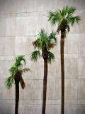 Three Palms at CSX