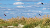 Sea Oats and Kites