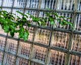 Glass with Foliage
