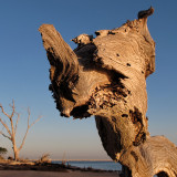 Driftwood Beastie