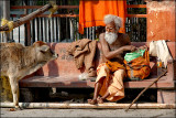 The Sadhu and the Cow