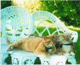 Catso Telling Secrets to the Peep.