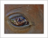 In the Horse's Eye