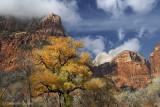 Zion Fall