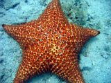 Sea Star @ Waterlemon