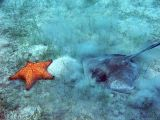 Sting Ray and Sea Star @ Waterlemon