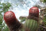 Cactus on trail to Rams Head with waves crash below