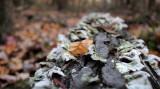 Woodland Composting