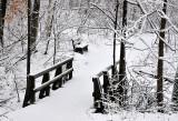 Walking Rowe Woods Winter Trails